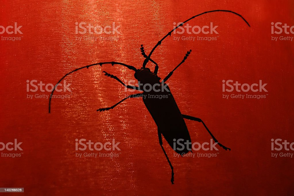 Hideous Insect on Red Lampshade stock photo