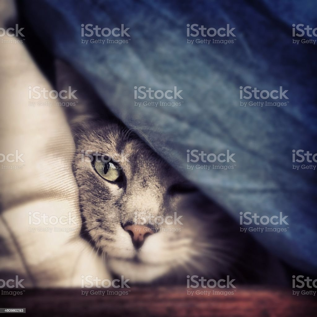 Hiding Cat stock photo