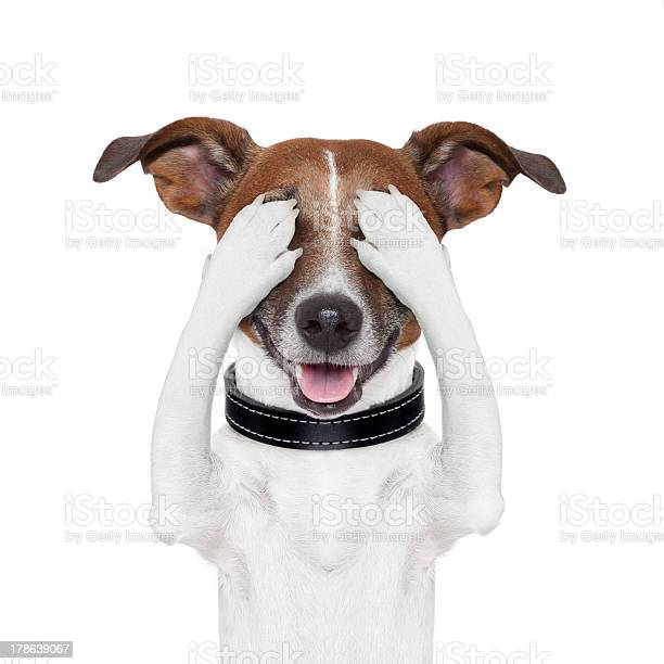 Hiding covering both eyes dog picture id178639067?b=1&k=6&m=178639067&s=612x612&h=9synbc4 f84w6mvcbs 0wkkait xhw8qmvno84qvxpi=