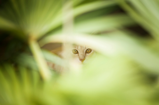 hiding in the bush