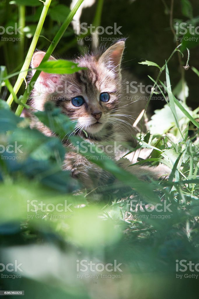 Hiding in the grass stock photo