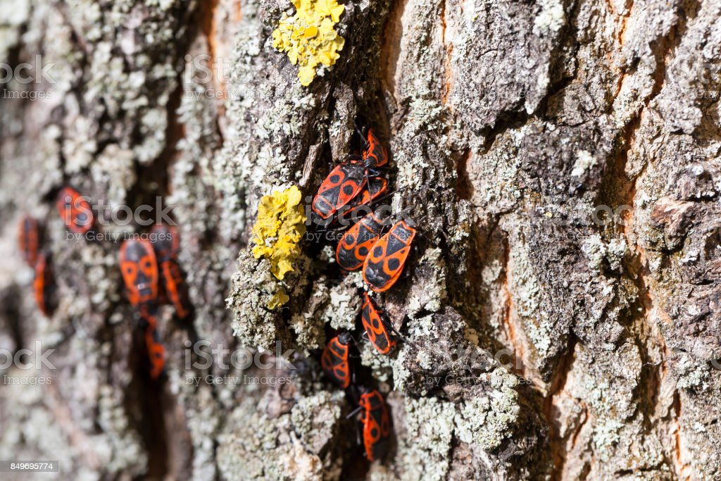 hiding insects, close-up stock photo