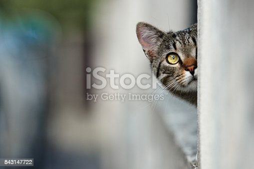 cute brown hair kitty with yellow eyes looking away.