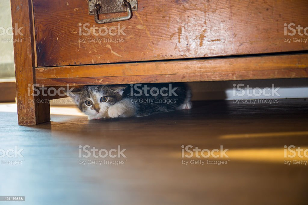 Hiding stock photo