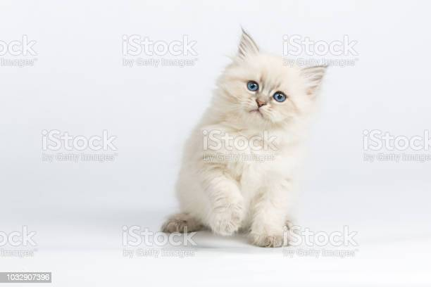 Hifive kitten picture id1032907396?b=1&k=6&m=1032907396&s=612x612&h=bpzhtnqnyoexgtprrwycic9  dnmstt1dplqkydxu64=