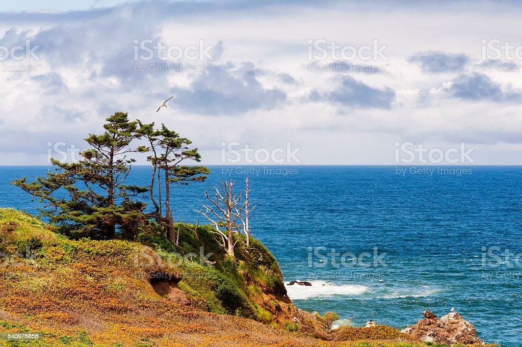 High above the shoreline on Oregon Coast stock photo