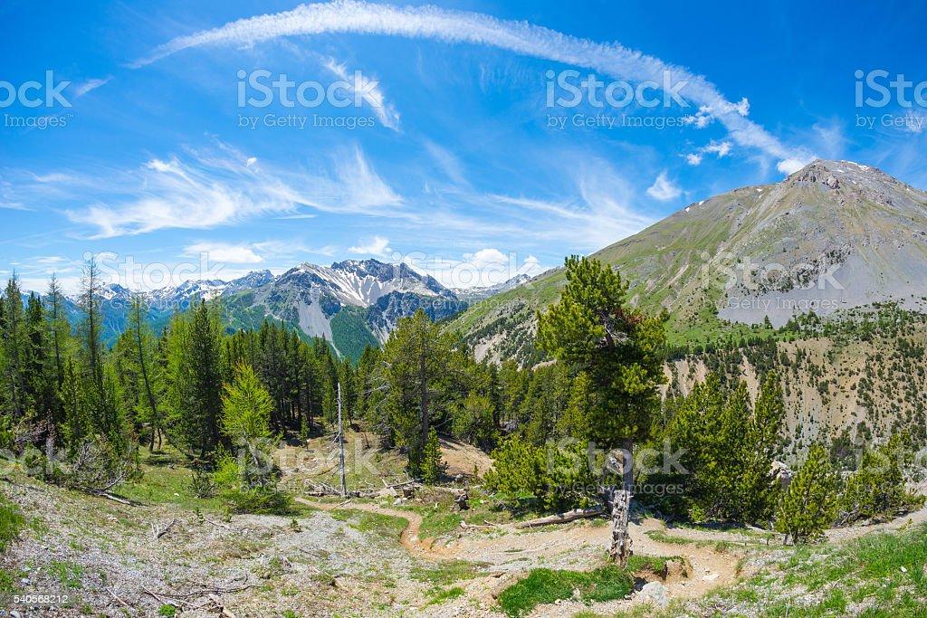 High altitude alpine woodland and snowcapped mountain range stock photo