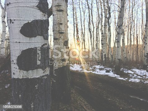 Pine Forest Trail Views High Altitude Hunting Western Colorado Aspen(photos professionally retouched and filters applied as needed with intentional lens flare - shot with iPhone 7 Plus with focal distance and composition variations (photos professionally retouched)