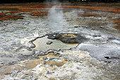 Mud Volcano Basin in Yellowstone National Park, Wyoming