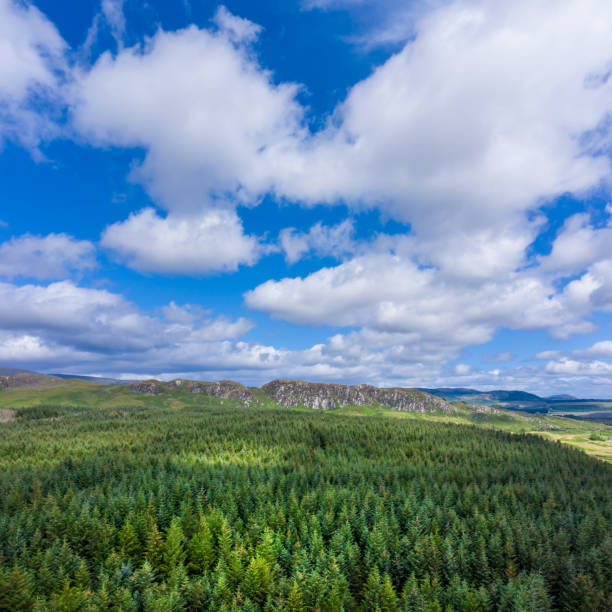 High angle square composition view of Scottish countryside with pine forest and hills. An image captured by a drone being flown above a remote location in Dumfries and Galloway, south west Scotland. Renewable forest is grown on this rough uncultivated land which is not ideal for farming although sheep and beef cattle are grazed in these areas. johnfscott stock pictures, royalty-free photos & images