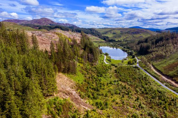 High angle view captured by a drone of an area of pine forest with recently felled trees An image captured by a drone as it is flown over an area of forest with recently felled trees. The location is Dumfries and Galloway in south west Scotland captured on a bright summer day. johnfscott stock pictures, royalty-free photos & images