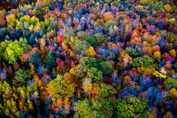 High angle view of forest in autumn stock photo
