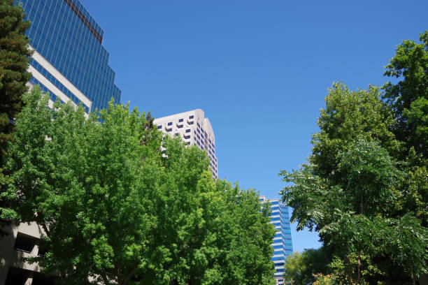 High Buildings and Trees stock photo