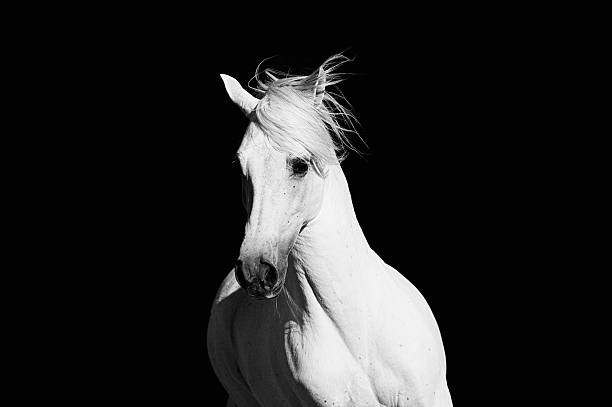 High Contrast Horse stock photo