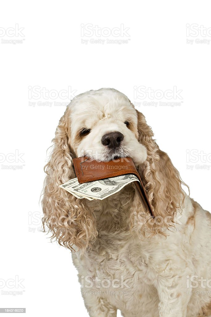 High Cost Of Pet Care stock photo