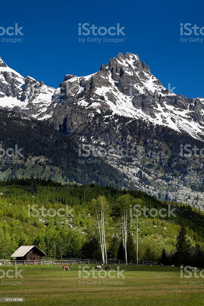 High Country Horse Pasture in the Tetons. royalty-free stock photo