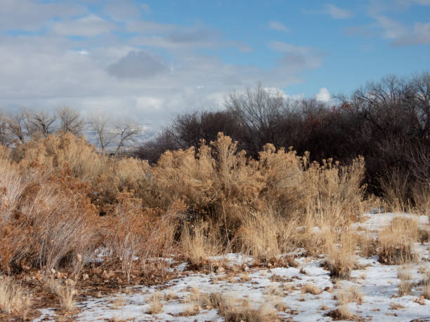 High Desert vegetation in winter stock photo