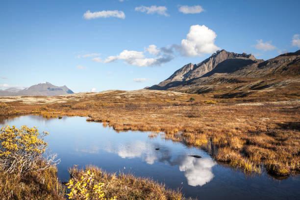 high elevation tundra in b.c. with pond in autumn - tundra imagens e fotografias de stock
