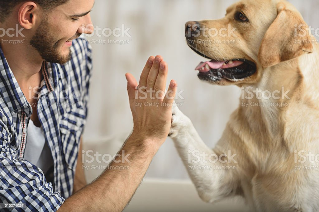 high five with dog and human - foto stock