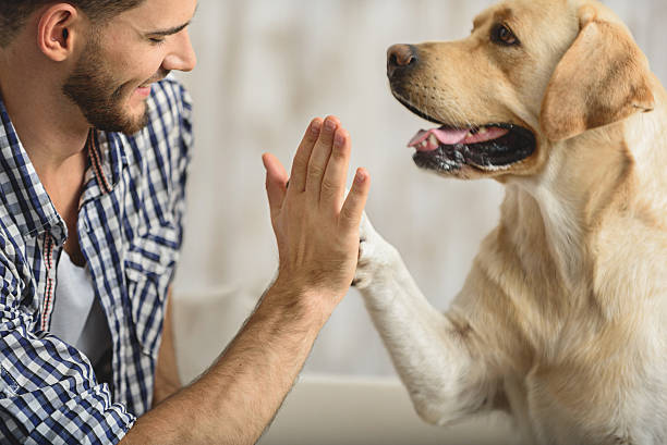high five with dog and human - canide foto e immagini stock
