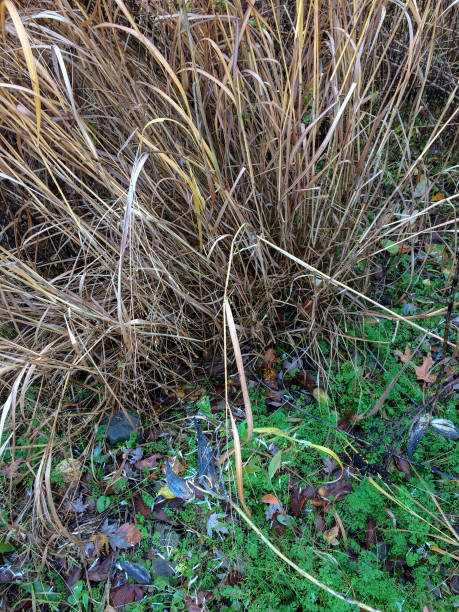 IMG_1949 High grass and fallen leaves in autumn stock photo