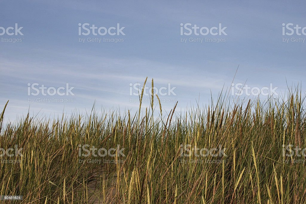 high grass and sky royalty-free stock photo