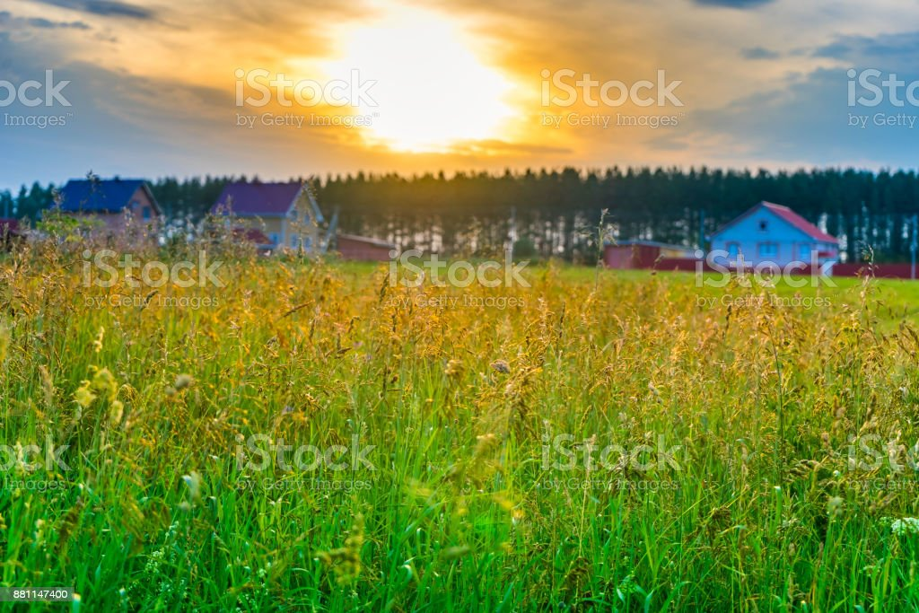 High grass on a field stock photo