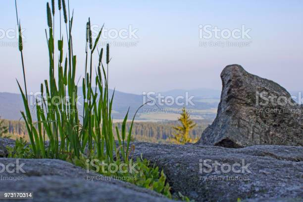 Photo of High grass with stones on vantage point Mandelstein, Austria