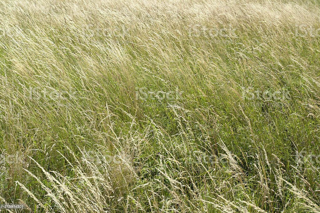 high grassland background royalty-free stock photo