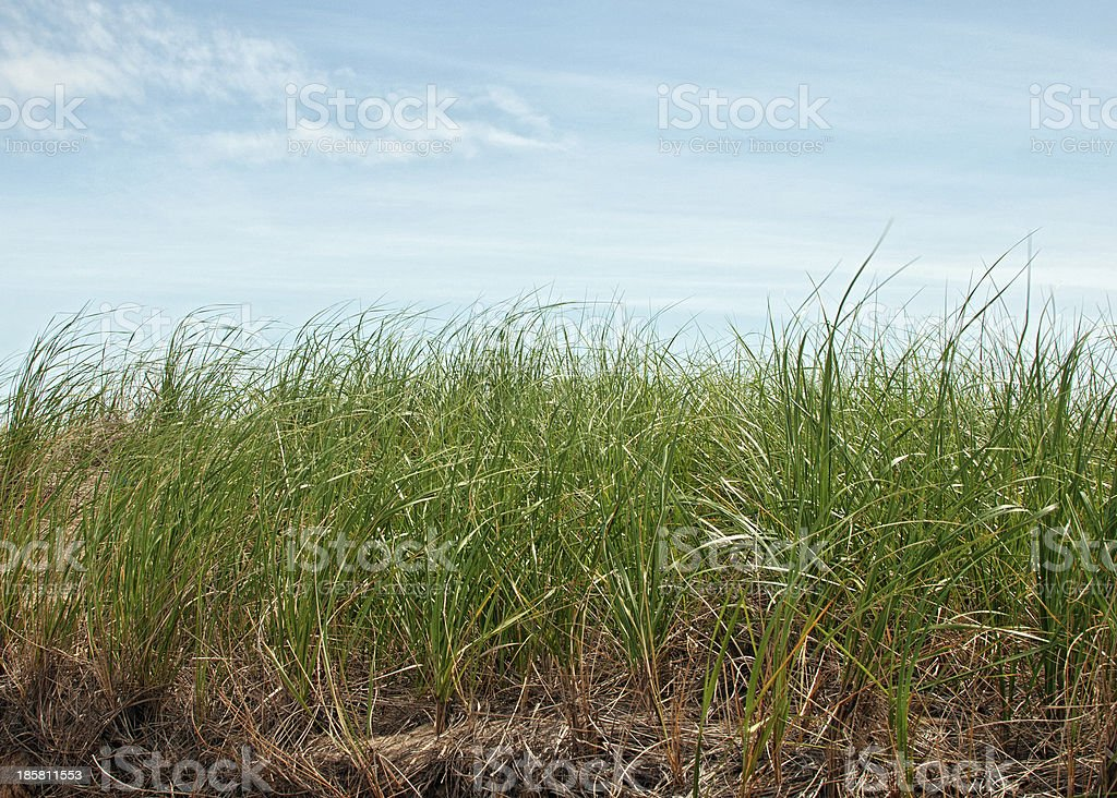 High green grass and sky royalty-free stock photo