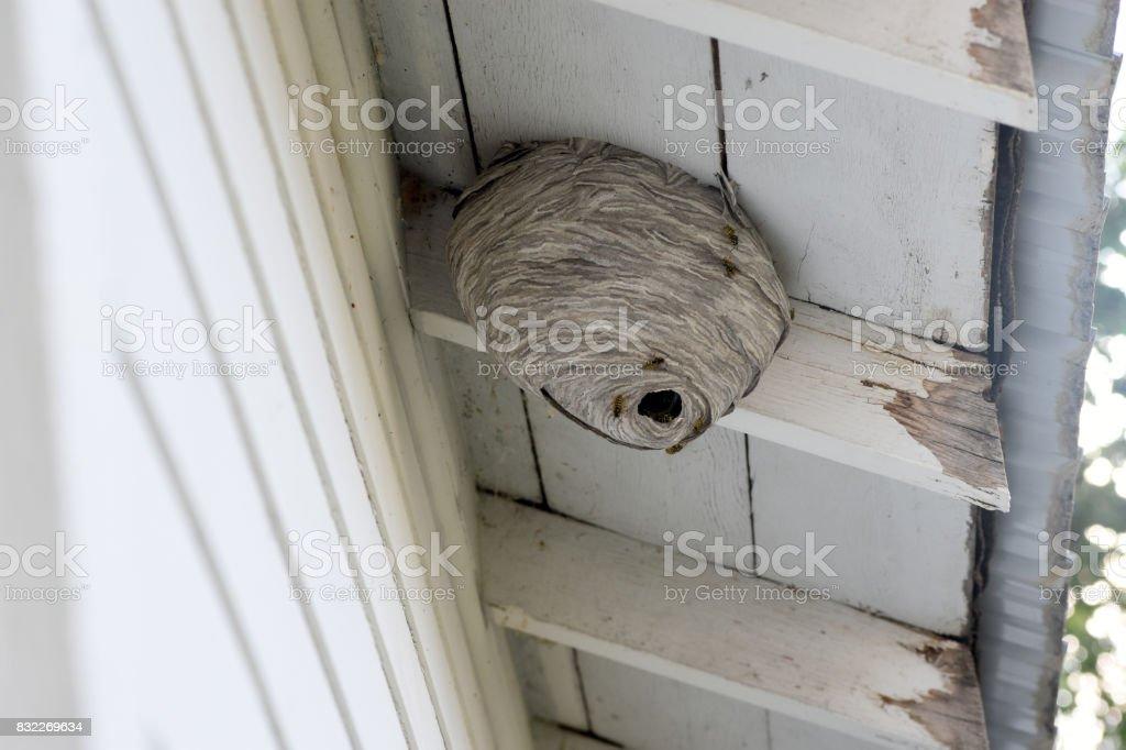 High Hornet nest stock photo