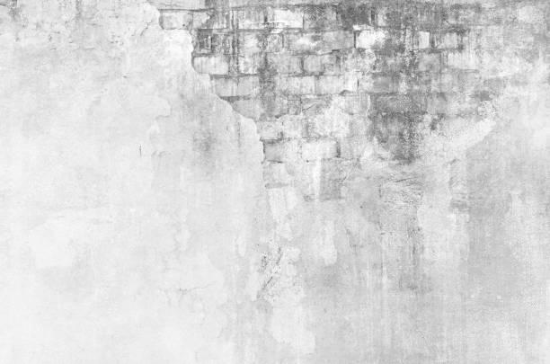 hohe schlüssel hintergrund in schwarz / weiß - farbe gegen schimmel stock-fotos und bilder