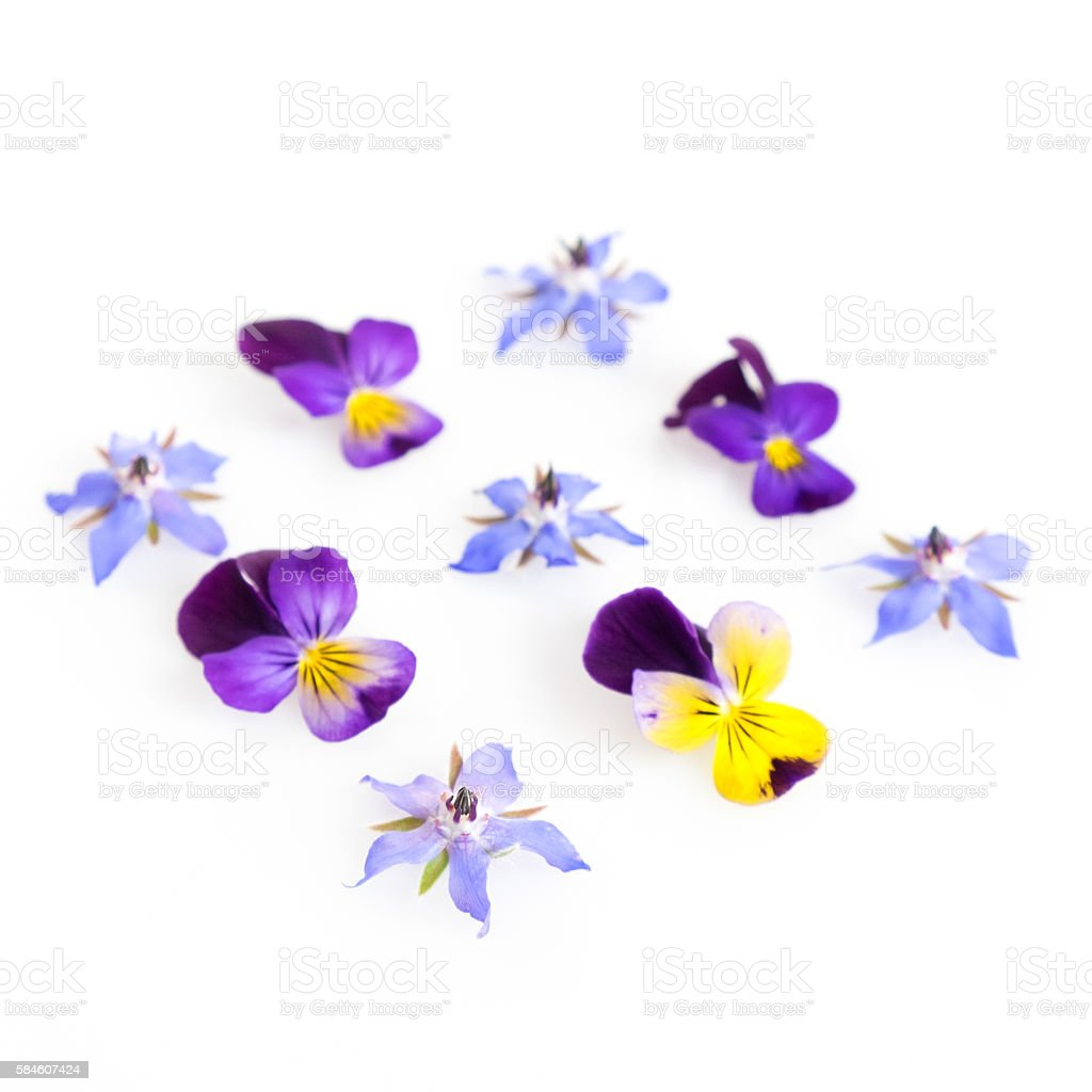 High Key Filtered Image Of Edible Flowers Stock Photo Download Image Now Istock