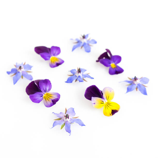 High key filtered image of edible flowers stock photo
