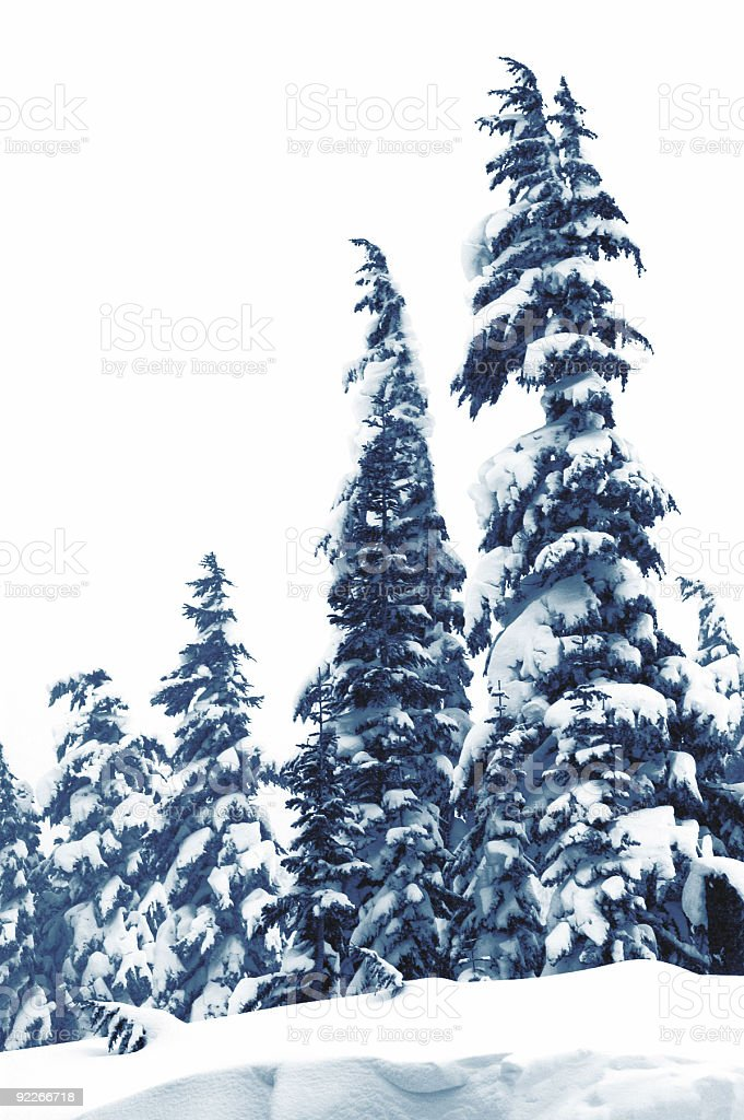 High Key - Snow in trees stock photo