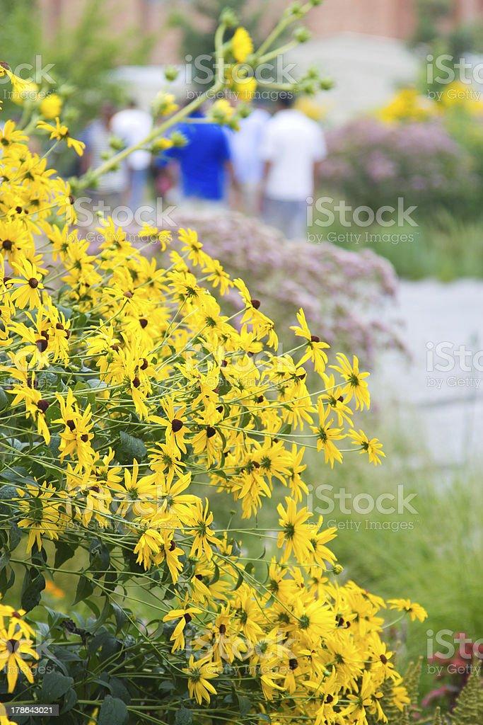 High Line Park daisies, NY stock photo