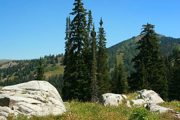 high meadow stock photo