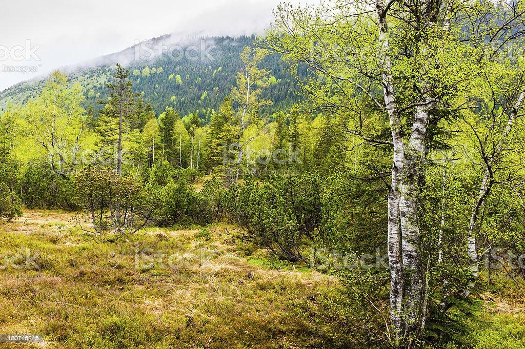 High moor landscape stock photo