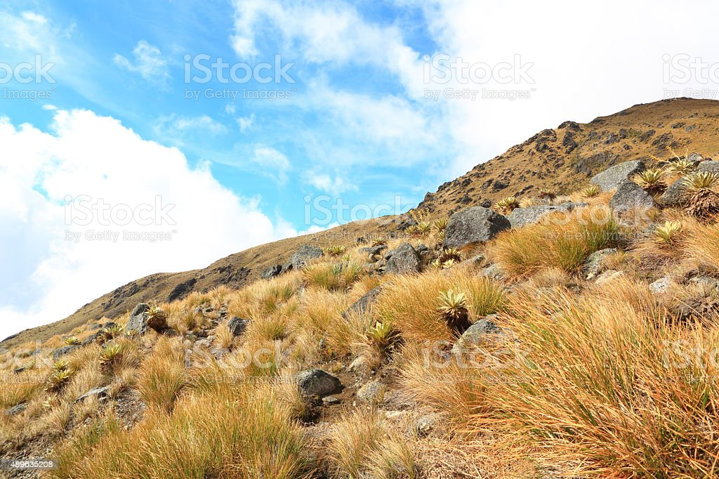 High Mountain Moorland in Tachira stock photo
