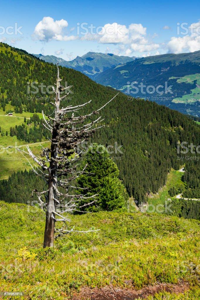 Hautes montagnes panoramiques avec arbre séché au premier plan. Autriche, Tirol, Zillertal High Road, Zillertaler Hoehenstrasse photo libre de droits