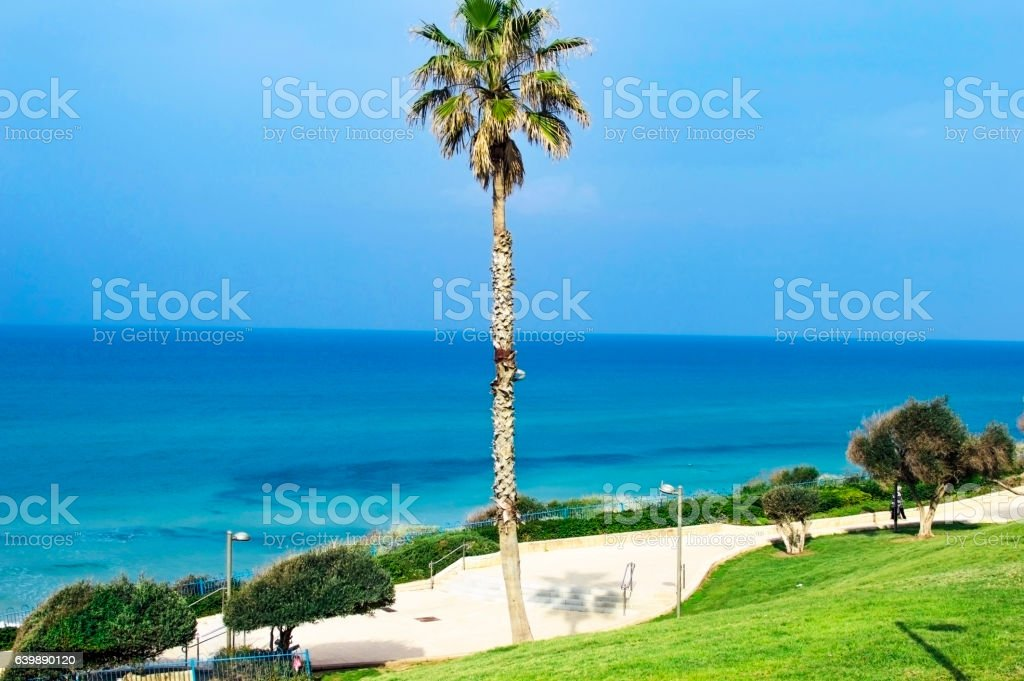 High palm tree with green branches stock photo