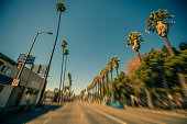 High palm trees in Hollywood, Los Angeles USA