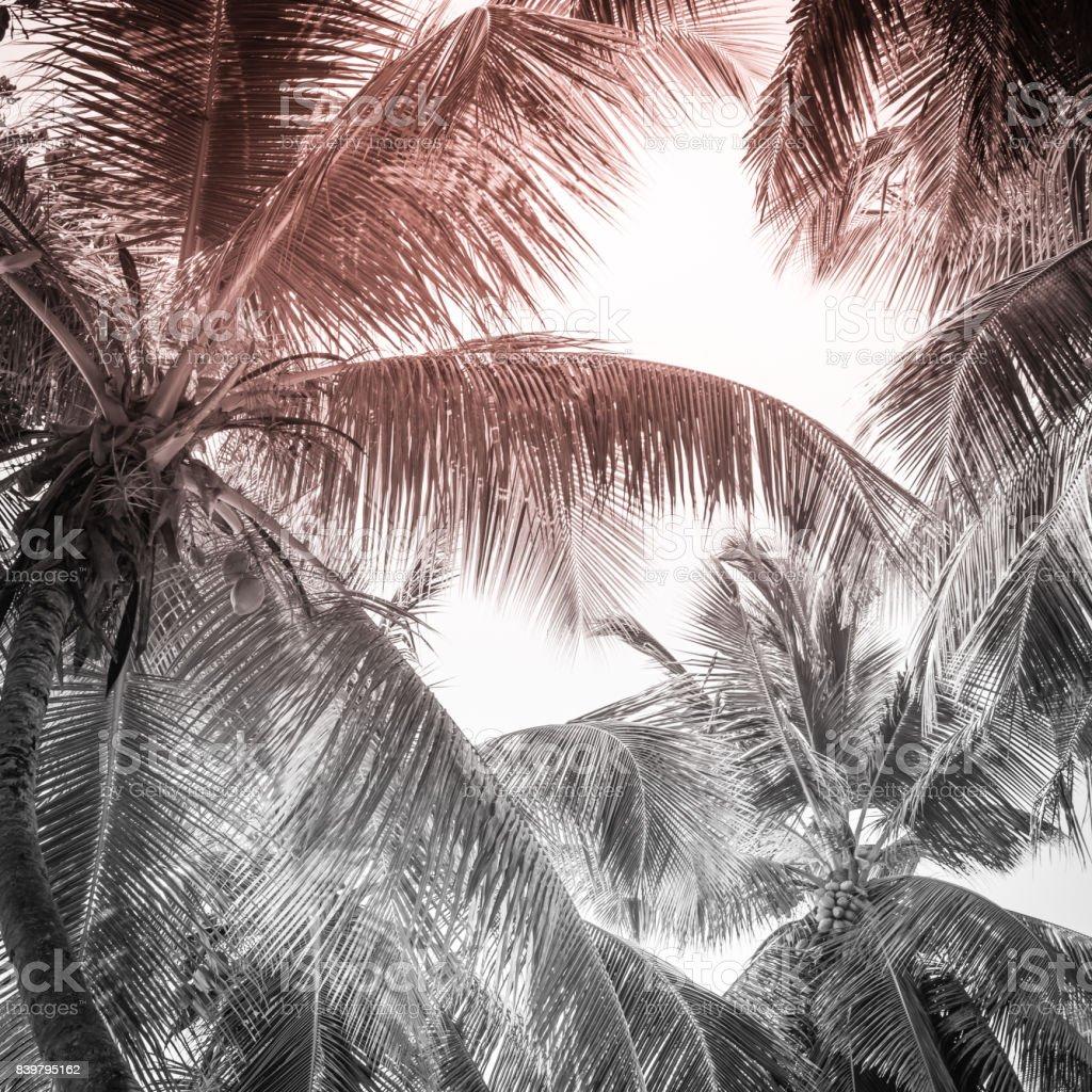 High palms on a tropical beach stock photo