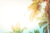 Tropical background with palm trees in sunlight. For Holiday travel design. Pastel toned