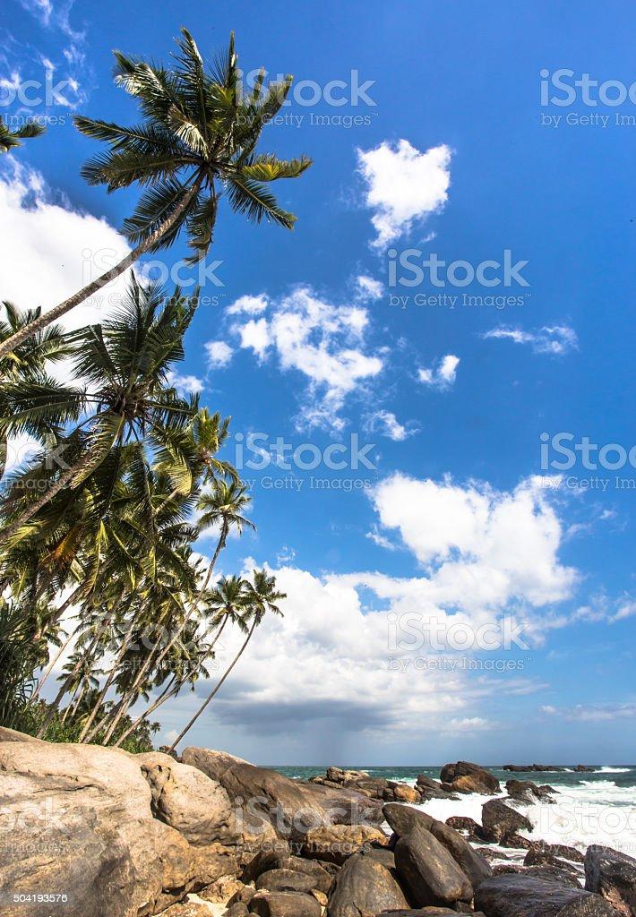 High palms stock photo