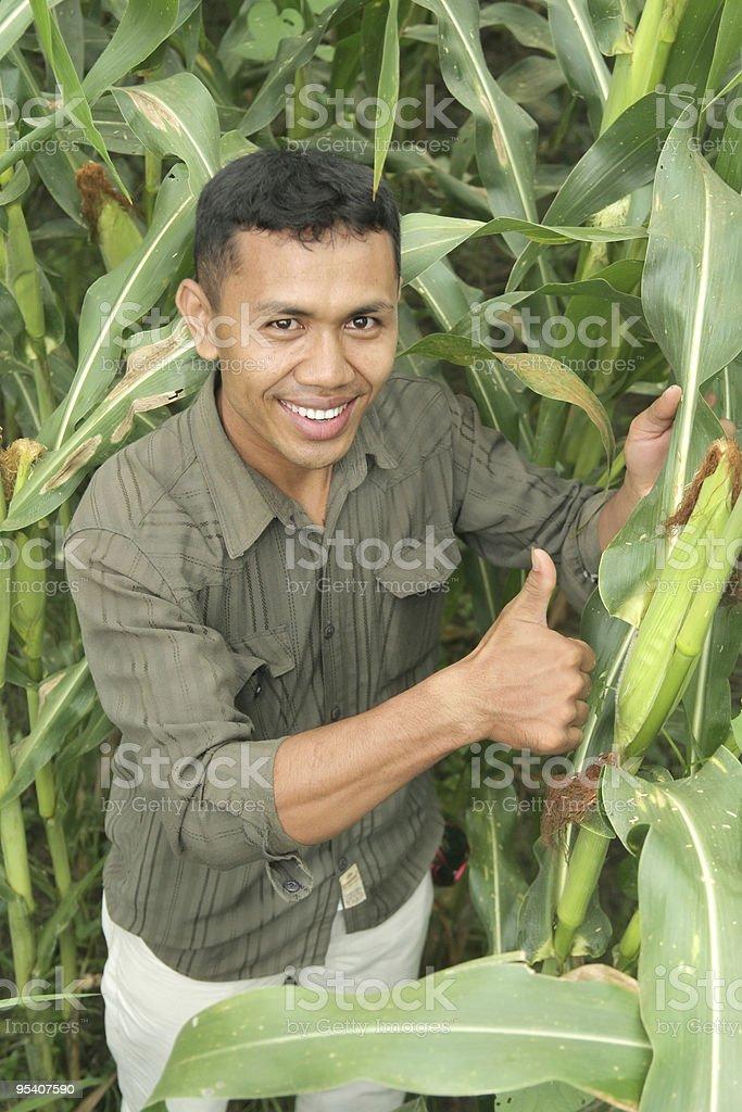 Hochwertige Landwirtschaft Lizenzfreies stock-foto