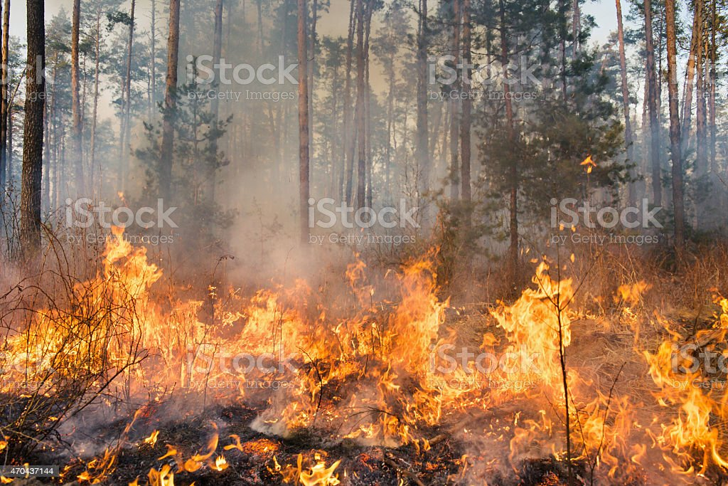 A high res photo of a forest fire in progress stock photo