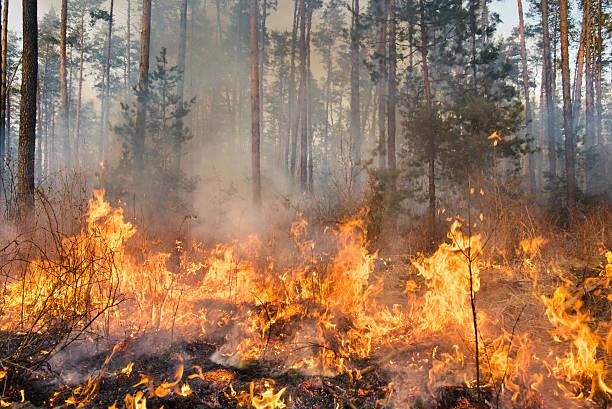 a high res photo of a forest fire in progress - bosbrand stockfoto's en -beelden