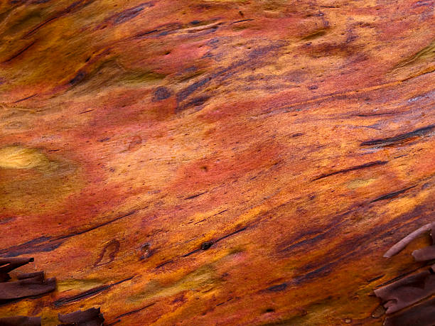 high resolution arbutus tree texture - naturediver stock pictures, royalty-free photos & images