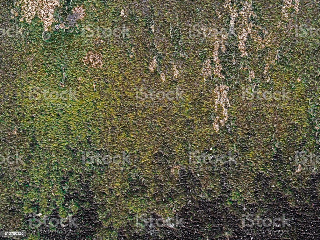 High Resolution Background of Dirty Lichens on Wall stock photo